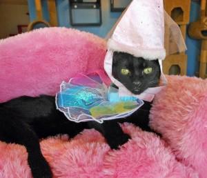 olivia-and-princess-hat