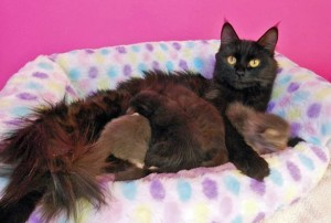 Matilda and kittens