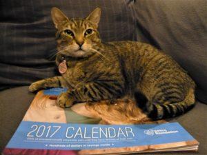 Petco 2017 Calendar